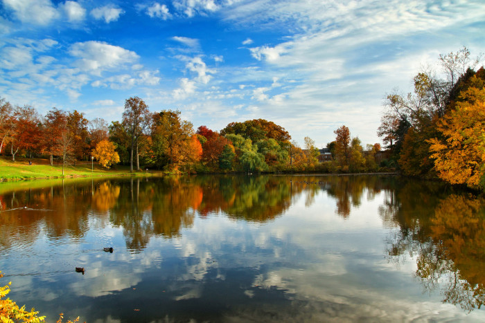 13. Our fall foliage will captivate you...
