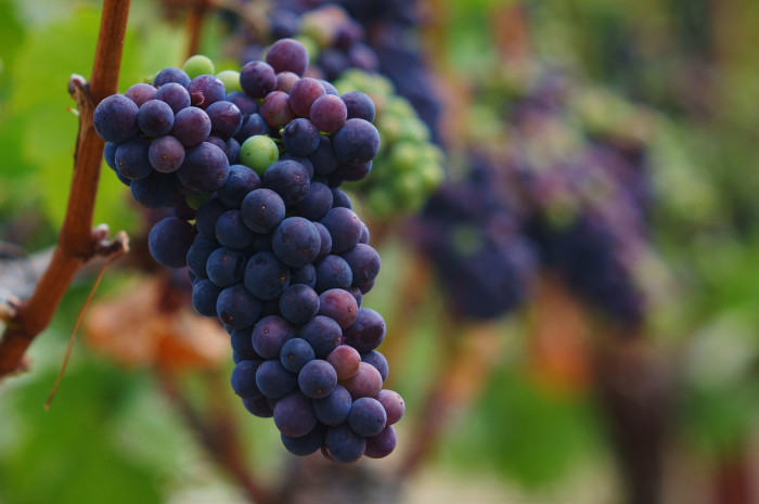 6) Take a tour of the Willamette Valley's wine country
