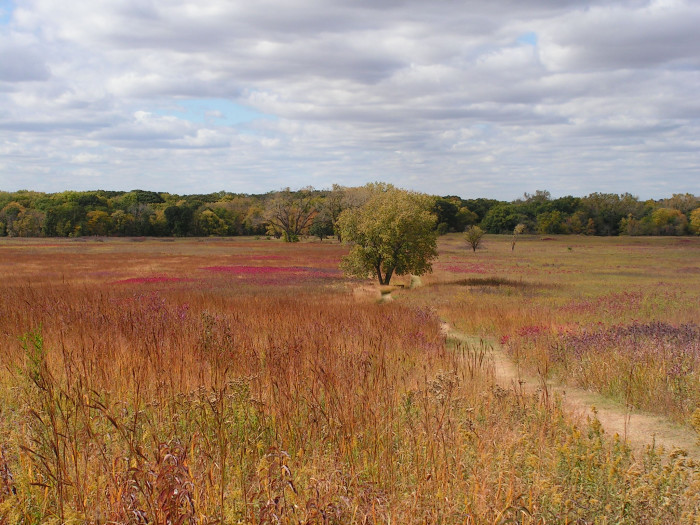 37. A Colorful Prairie at the Homestead National Monument of America, Beatrice