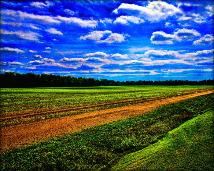 9. Even fields are stunning in Mississippi.