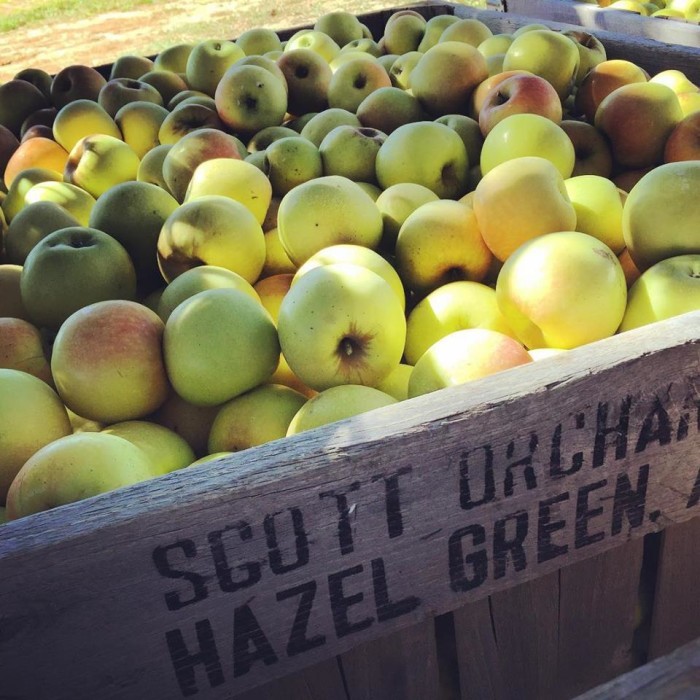 5. Many apple orchards open as fall approaches.