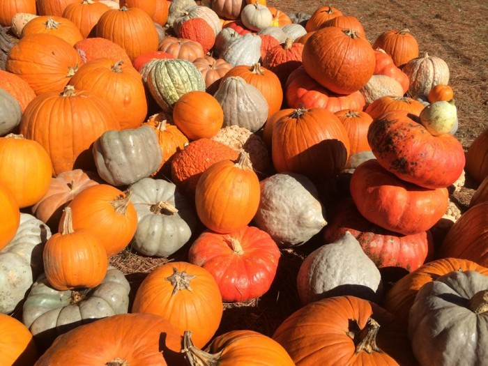 3. Visit one of Alabama's pumpkin patches.