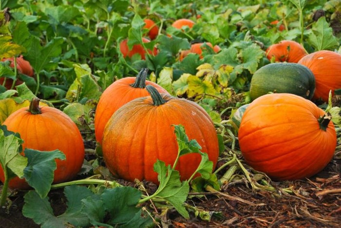 9. ...and pumpkin patch visits.