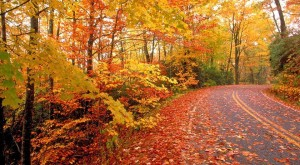 The Fall Foliage At These 10 State Parks In Alabama Is Stunningly Beautiful
