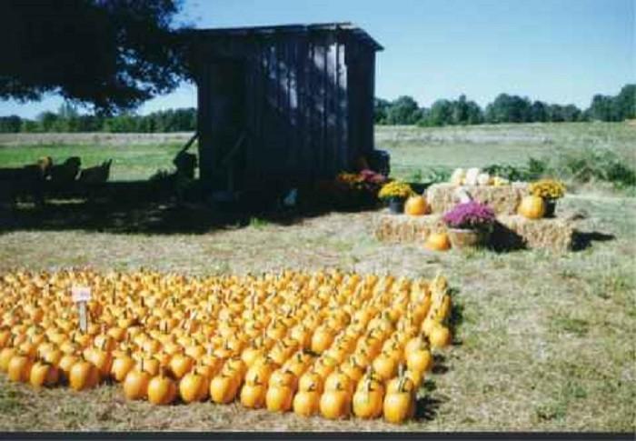 5. McGee Farm Pumpkin Patch
