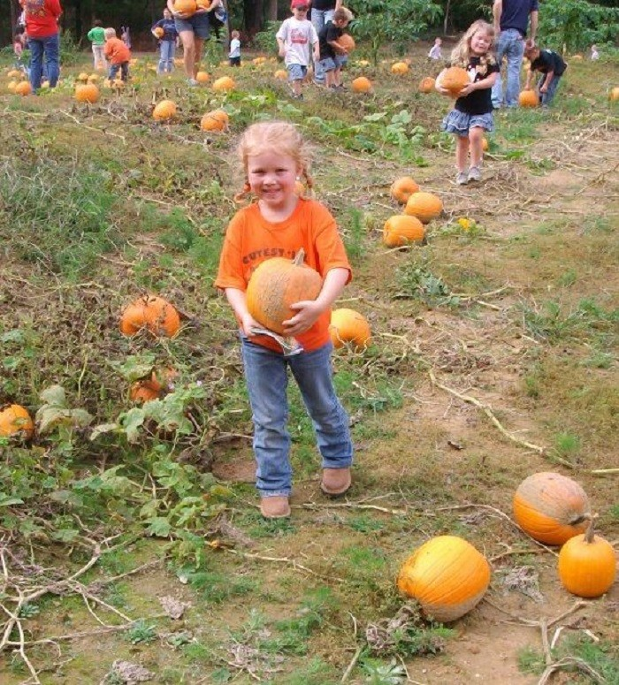 8. Down on the Farm Pumpkin Patch