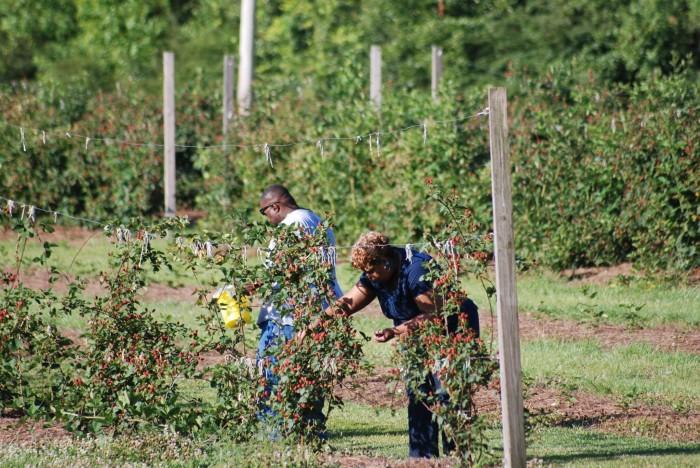 3. Gardners Berry Farm - Robertsdale, AL