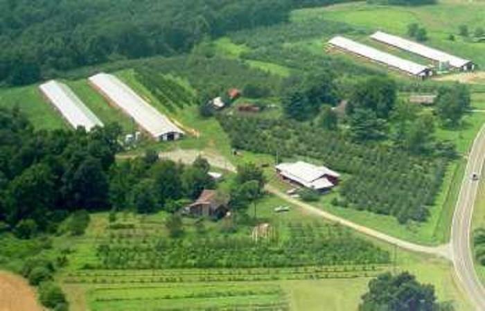 6. Steele Orchard - Cullman, AL