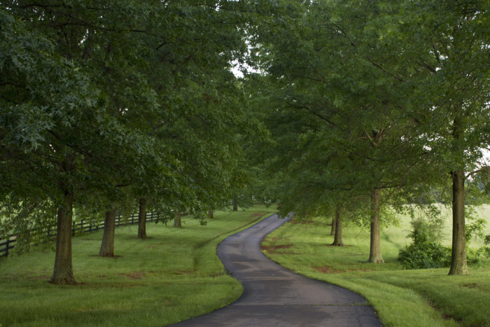3. Drive the tree-lined country roads at Airlie, an historic 1,200-acre former plantation in Warrenton.