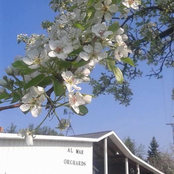 9) Almar Orchards & Farm, Flushing