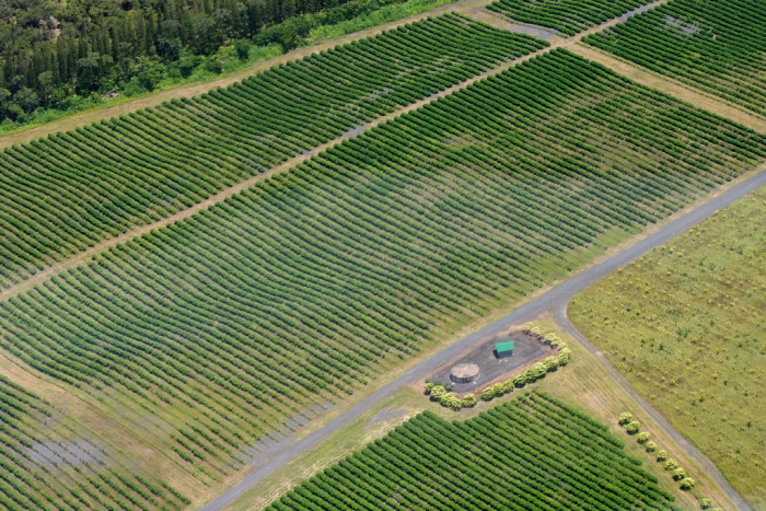 7) An aerial view of a farm outside Hilo.