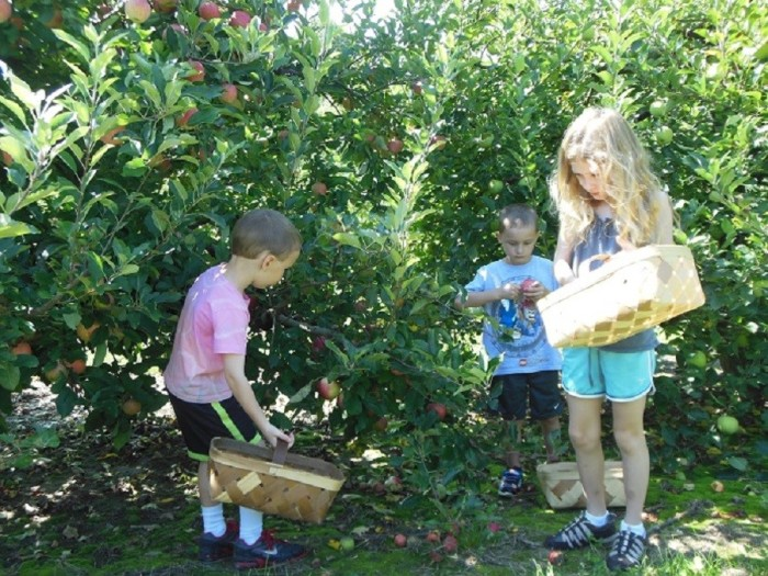 1. Stepp's Hillcrest Orchard
