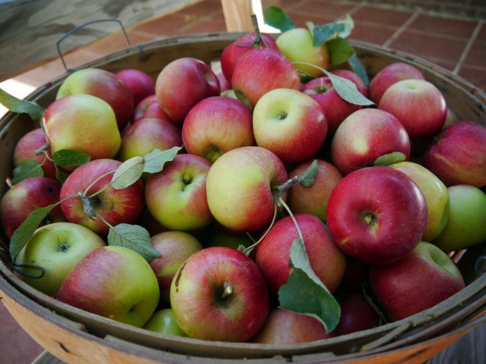 3) Pick your own produce at a stunning local farm.