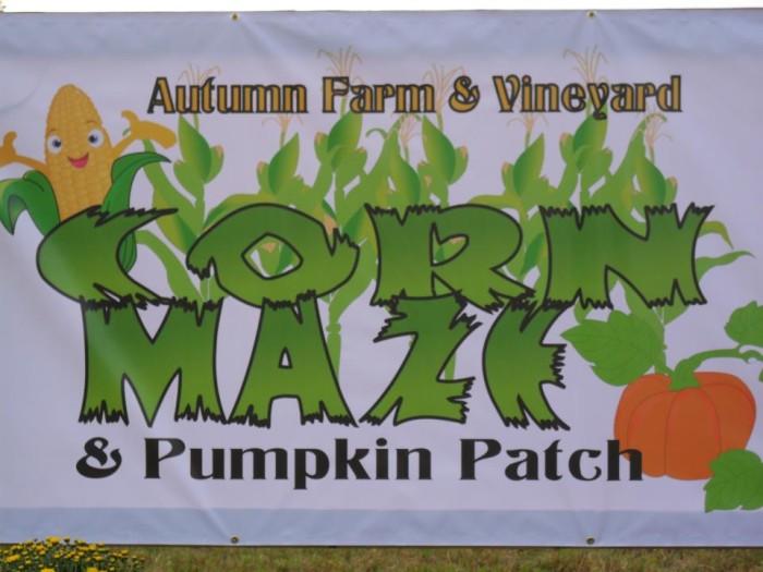 4. Autumn Farm and Vineyard