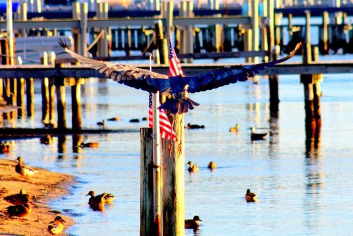 8. Bird watching at Barnegat Bay, taken by Dawn Breslin Lynch