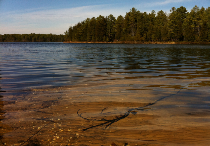 8. Bass River State Forest, Tuckerton