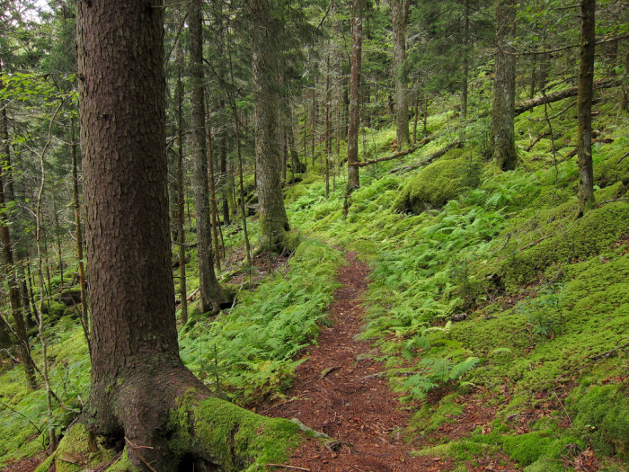 12) We have some gorgeous hikes for all you adventurous folk.