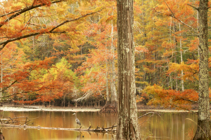 Cities In Ms >> You Must Visit These Awesome Places In Mississippi This Fall