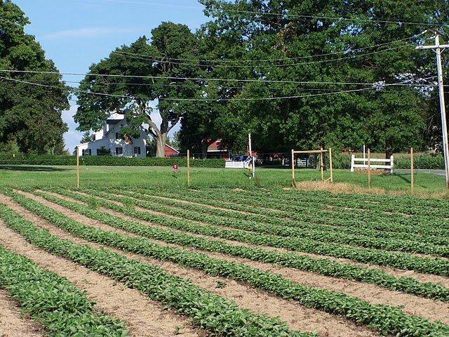 2. Bonacorsi Family Farm, Flemington
