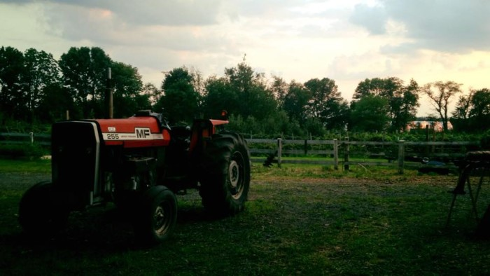 4. Bonacorsi Family Farms, Flemington