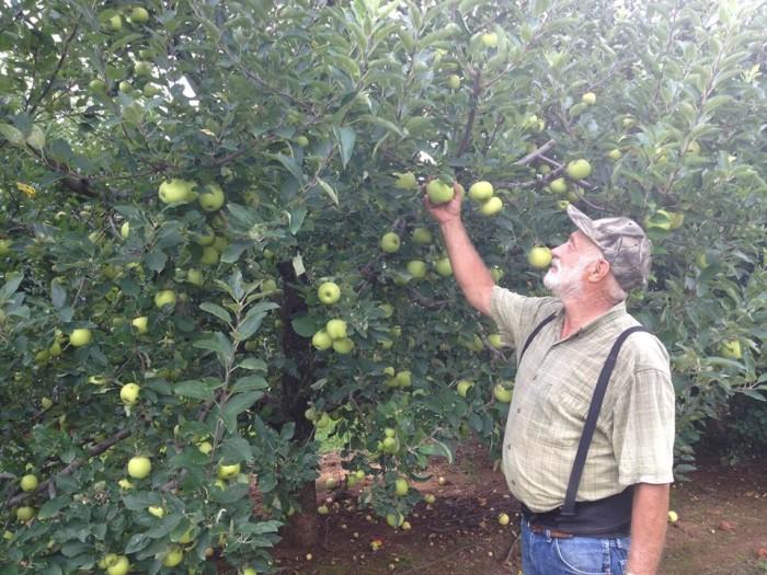 13. Bryson's Apple Orchard