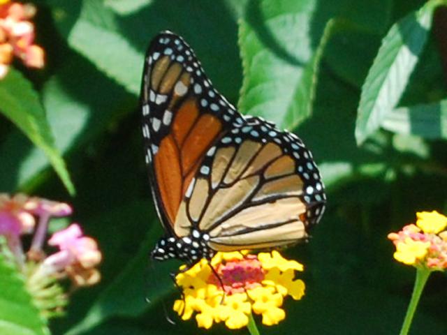 9. Birdwatching and Butterflies