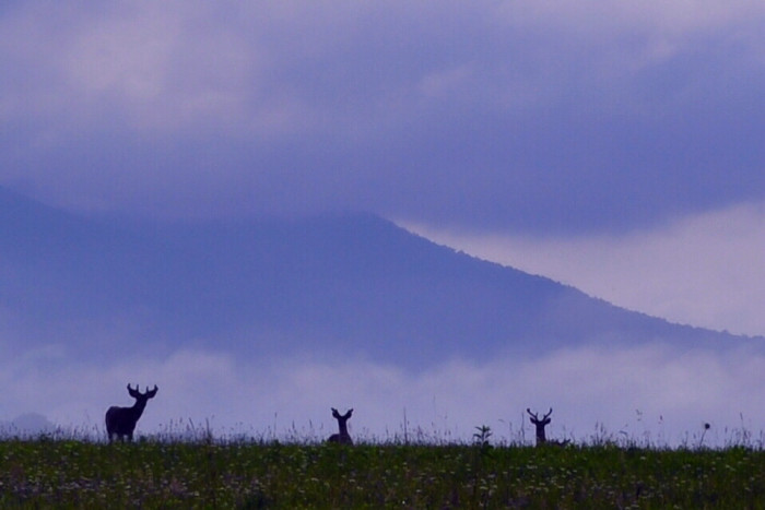 11) Plus places like Cades Cove, that will take your breath away.