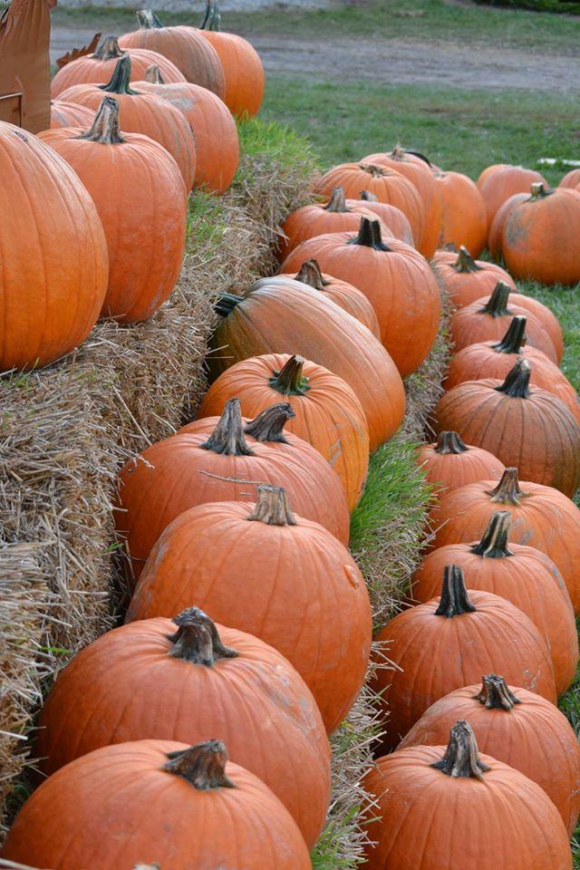 9) Carpenter Farms Pumpkins, Adrian