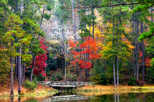 12. Clear Springs Lake, also located in the Homochitto National Forest, is open to paddlers - making for a day of fun and stunning scenery.