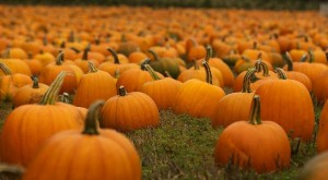 Don't Miss These 10 Great Pumpkin Patches In South Carolina This Fall