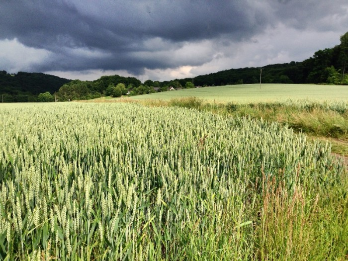 9. Corn Maze Attractions