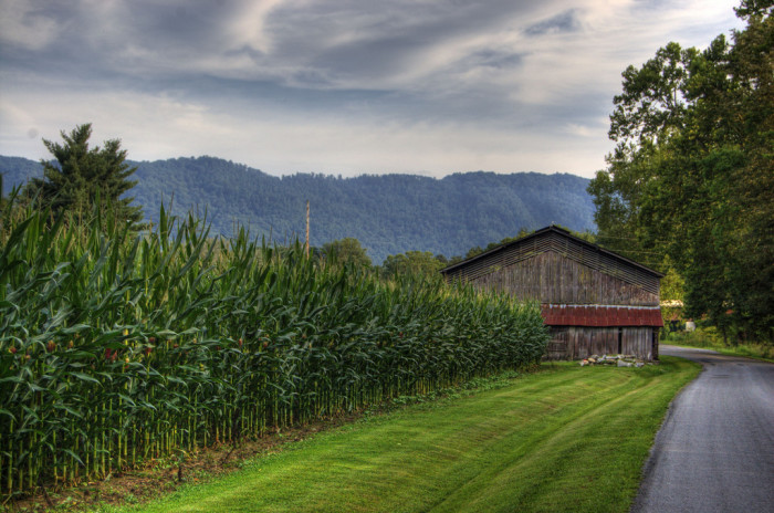 13. Corn fields go from this…