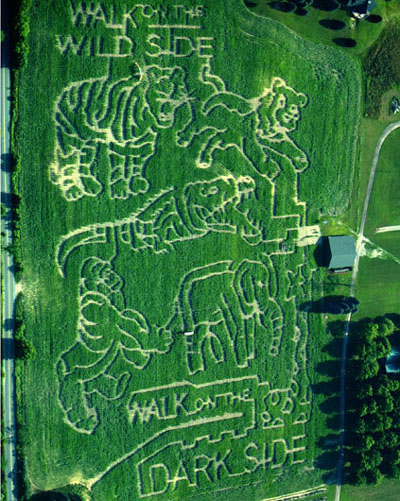 9 Awesome Corn Mazes In Michigan You Have To Do This Fall
