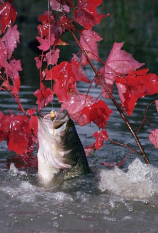 4. Fall Fishing