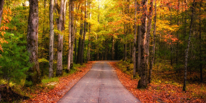 1) Getting lost in Tennessee? In the fall? Prime.