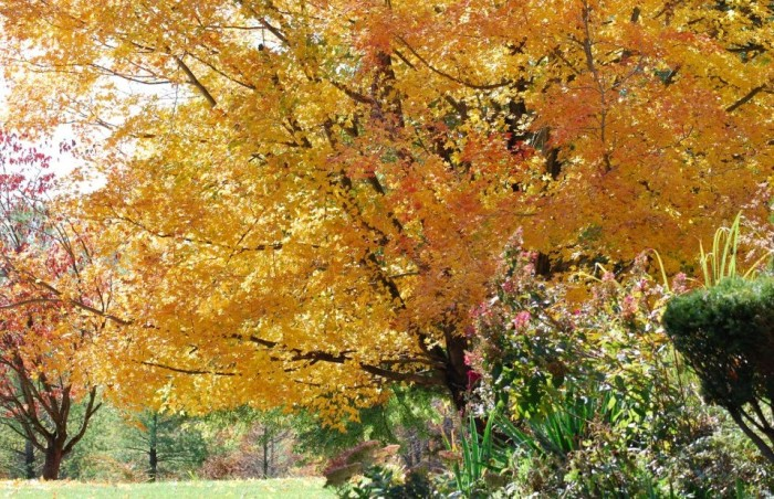 5. Fall in North Eastern Kentucky