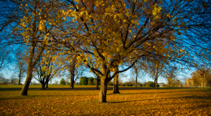 15 Undeniable Signs That Fall Is Almost Here In Iowa