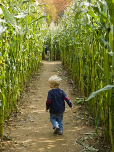 6) Fazio Farms Corn Maze & More, Portland