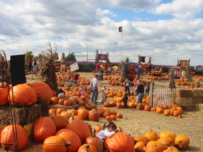 8) There are tons of harvest festivals to choose from.