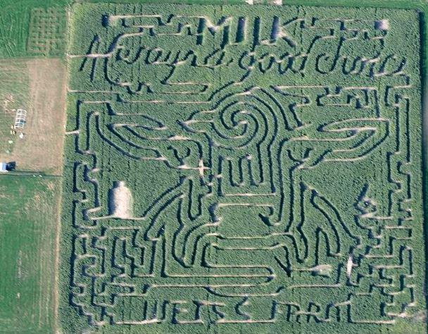 4) Frankenmuth Corn Maze