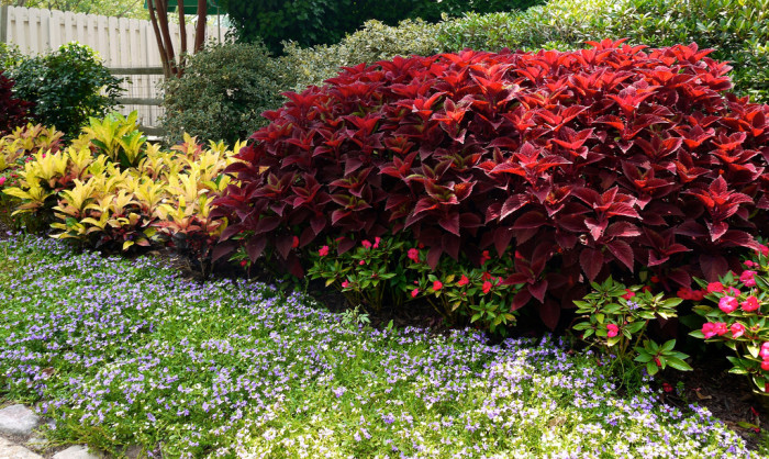 6. Gardening for Spring, Summer, Fall and Winter