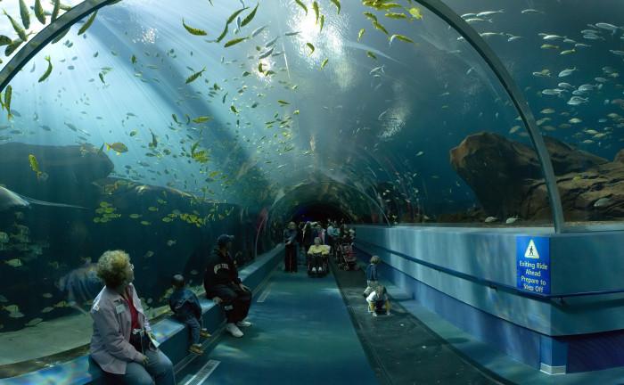 6. Take the kids to The Georgia Aquarium - 225 Baker St NW, Atlanta, GA 30313