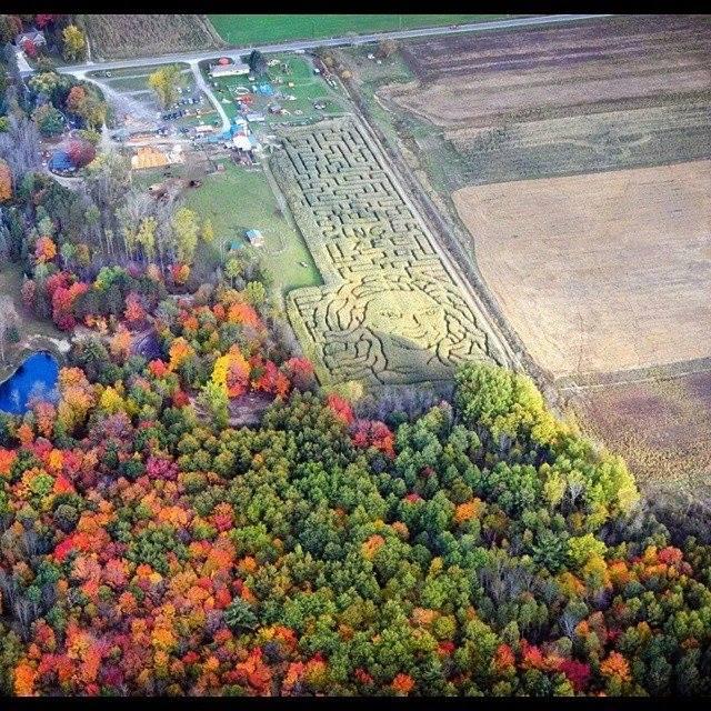 3) Grandmas Pumpkin Patch, Midland