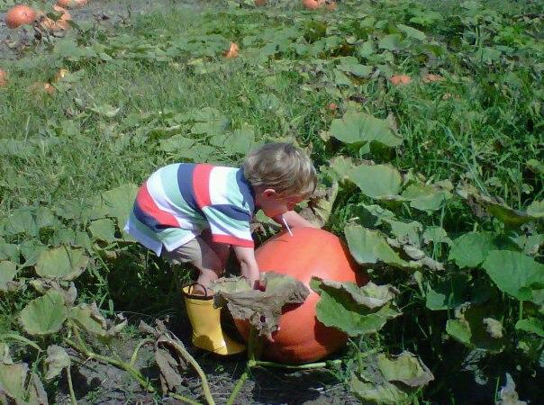 Greenbrier Farms boy
