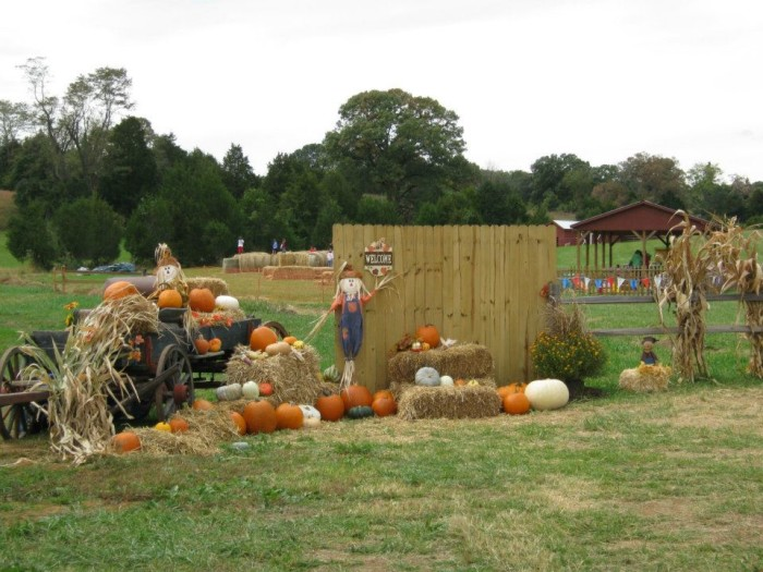Don t miss these 14 pumpkin patches in virginia this fall for Greenfield farm