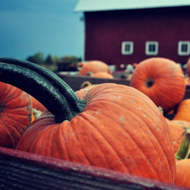6) Gust Brother's Pumpkin Farm, Ottowa Lake