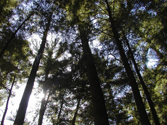 4) Hartwick Pines State Park, Grayling