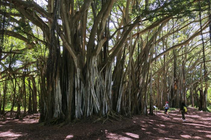 7) Kawela Bay, Oahu