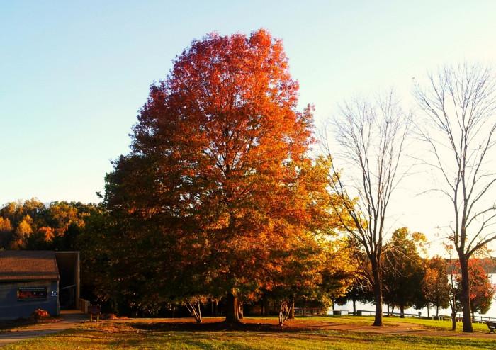14. Lake Anna State Park, Spotsylvania