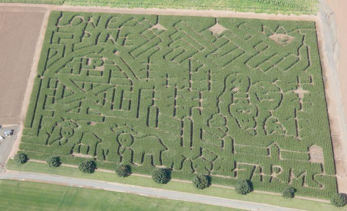 3) Lone Pine Farm, Junction City